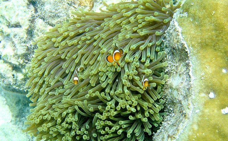 태국의 몰디브라 불리는 마지막 지상낙원인 꼬리뻬(Koh lipe) 가는 방법!